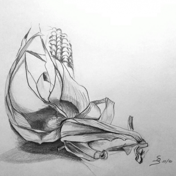 Corn, 23 x 29 cm, pencil drawing